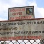 ケニア「ギチャタイニ」販売開始のお知らせ。